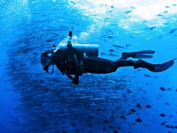 Barracuda Point - Best Scuba Travel in Malaysia