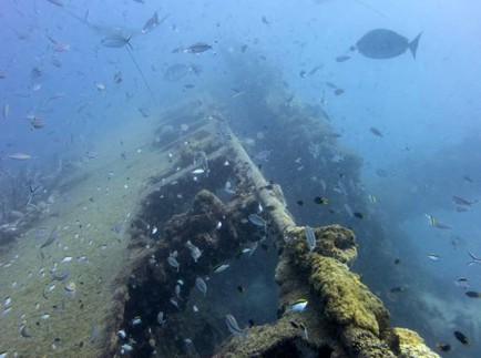 Best Wreck Diving - S.S. Yongala