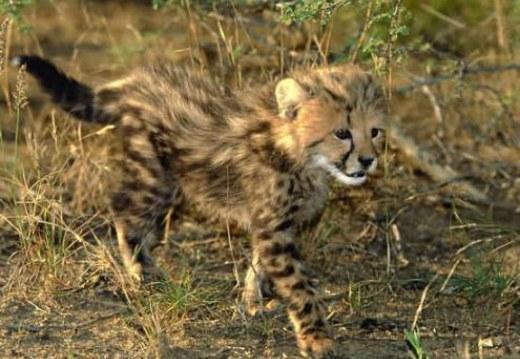 Kruger National Park - Adventurous Escape