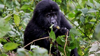 Luxury Lodges in Uganda for Gorilla Trekking