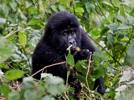Luxury-Lodges-for-Gorilla-Trekking-Uganda