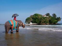 Taprobane Sri Lanka 5