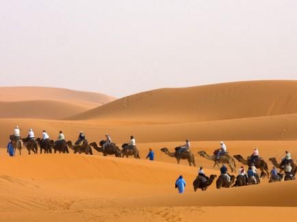 Camel Trek Across the Sahara Desert