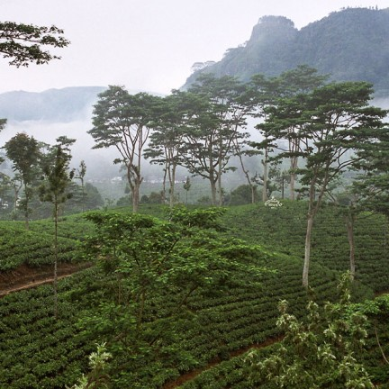Explore tea trails Sri Lanka