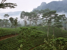 Explore tea trails Sri Lanka